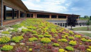 INOQ Mykorrhiza für Dachbegrünung