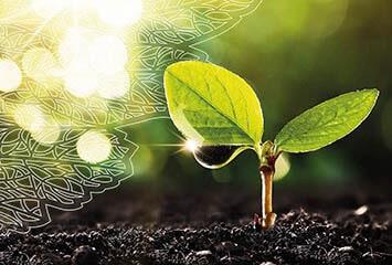 INOQ Mykorrhiza - Mykorrhiza für starke Pflanzen
